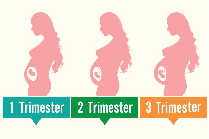 Tamanho do útero durante a gravidez