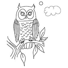 Coruja-para-colorir-16