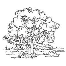 Desenhos de carvalho selvagem para colorir