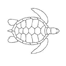 Tartaruga Shee nadando na água para colorir imagem