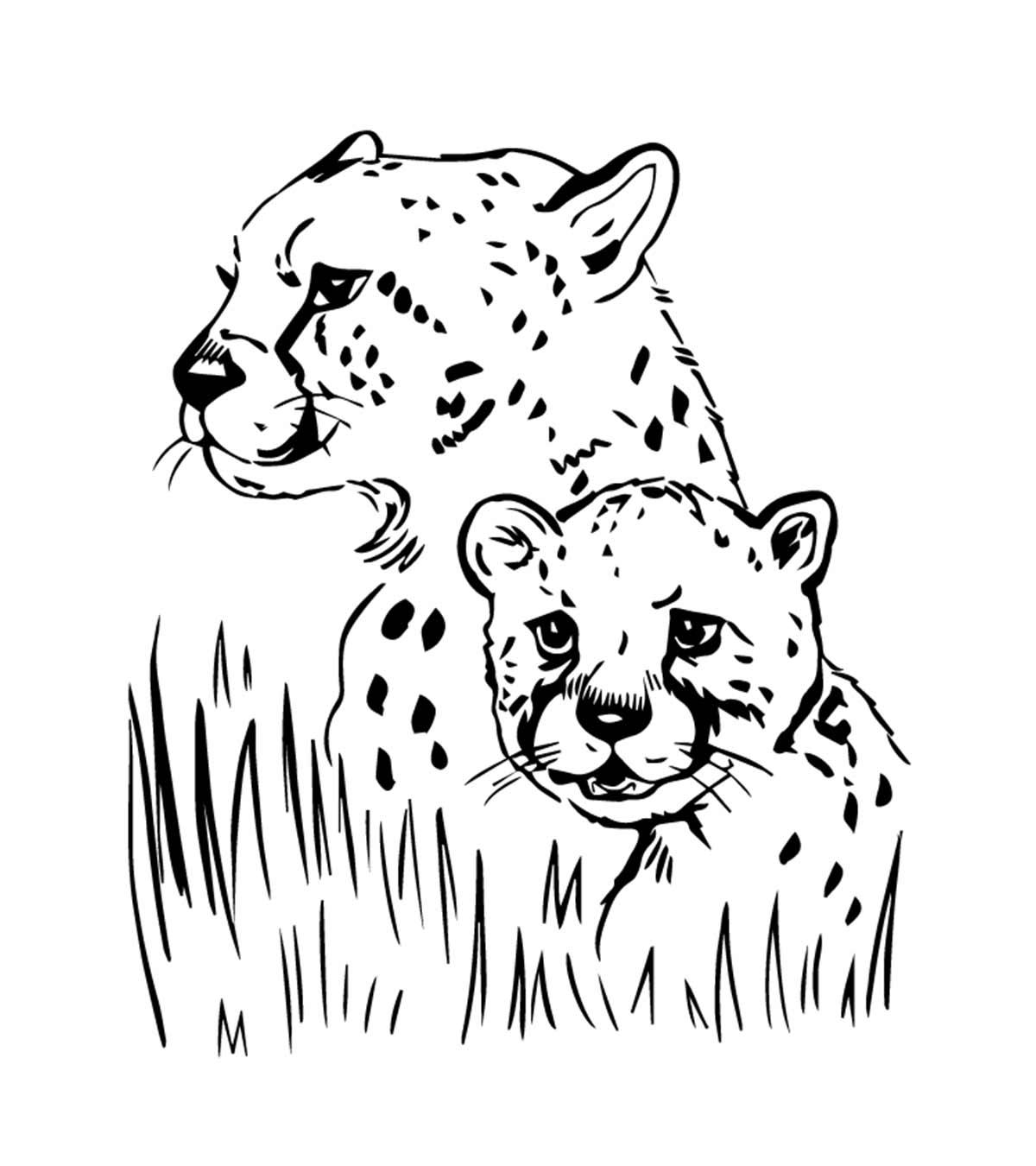 Jaguar-Colorir-Páginas