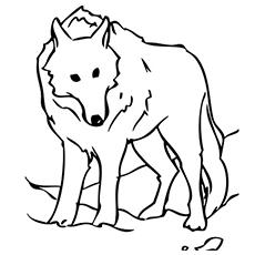 Desenhos para colorir Lobo estacionário grátis