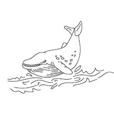 Baleia cinzenta