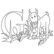 O-g-para-cabra