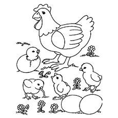 Mãe galinha com quatro filhotes juntos para colorir