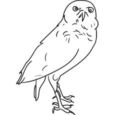 Desenhos de coruja-buraqueira