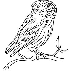 Eurasian Owl Owl Coloring