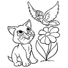 O gatinho brincando com um pássaro