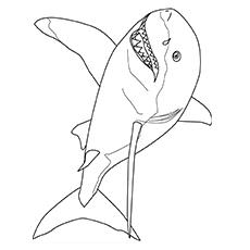 Imagens de Mako Shark para colorir