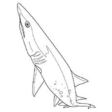 Desenho de Tubarão Cladoselache para colorir