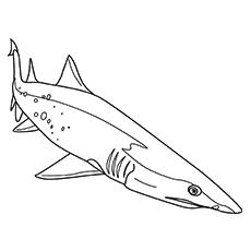 Desenhos de tubarões brancos para colorir