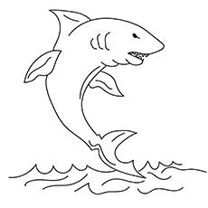 Tubarão-limão