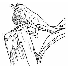 O lagarto com pele pendurada