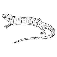 O lagarto com escamas