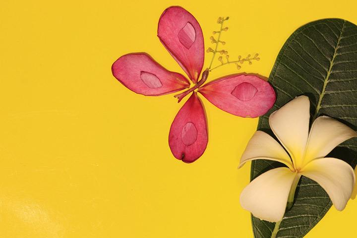 Borboleta floral