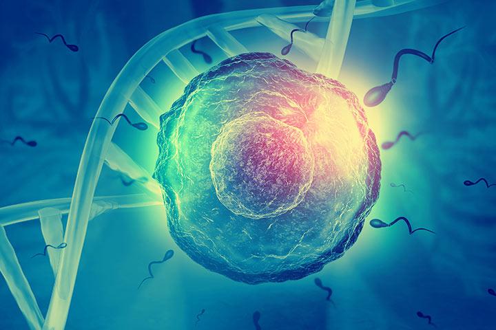 Outros sinais de ovulação