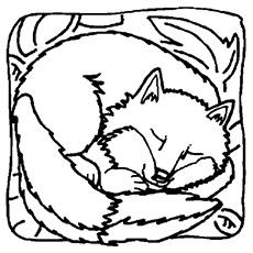A raposa adormecida