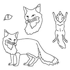 Imagens de Fox-16 para colorir