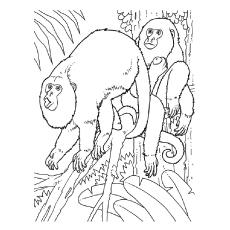 Desenhos de macacos bugios para colorir