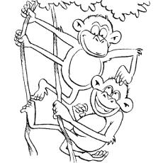 Ramo de macacos engraçados