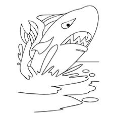 Desenhos de baleia brava para colorir