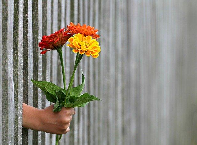 imagem de cercas