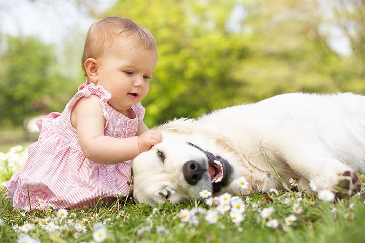 meu bebê é alérgico a cães