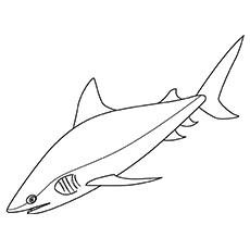 Desenhos de tubarão-touro para colorir