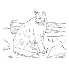 Desenhos para colorir - Uma pantera negra perto de um tronco
