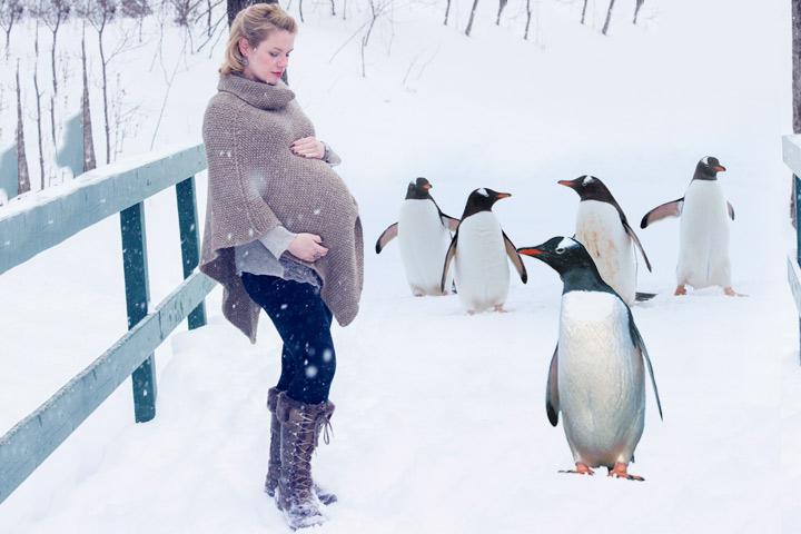 Pesquisa confirma que mulheres grávidas entram em pinguins