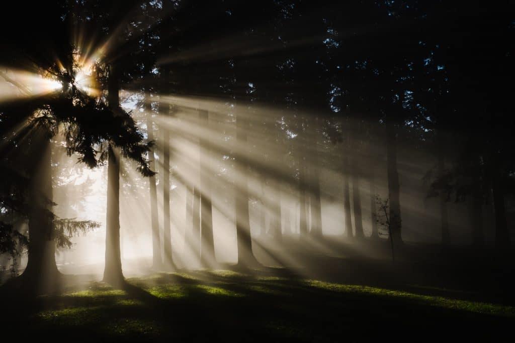 floresta escura com árvores e sol