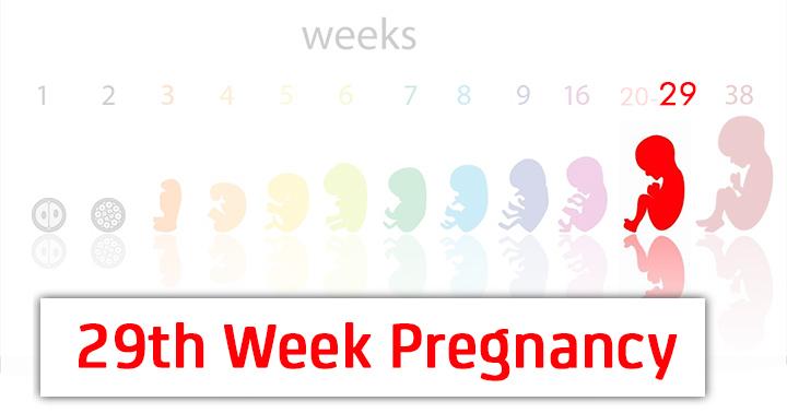 29ª semana de gravidez