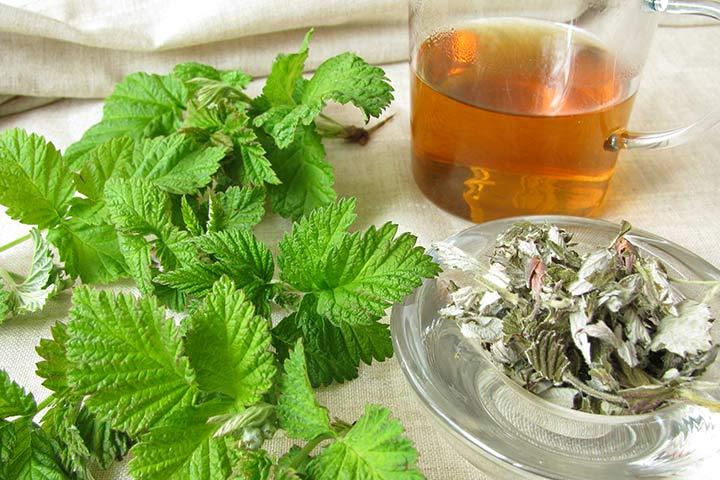 Chá de folhas de framboesa O melhor chá para mulheres