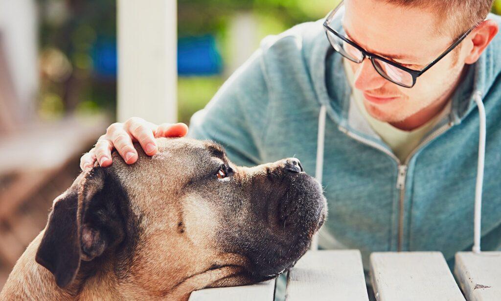 Como lidar com a perda de um animal de estimação