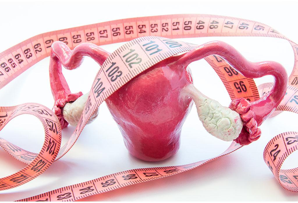 Modelo anatômico de ovários e uma fita métrica.