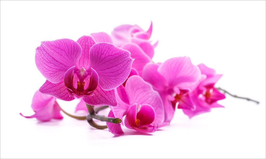 Características da criança orquídea