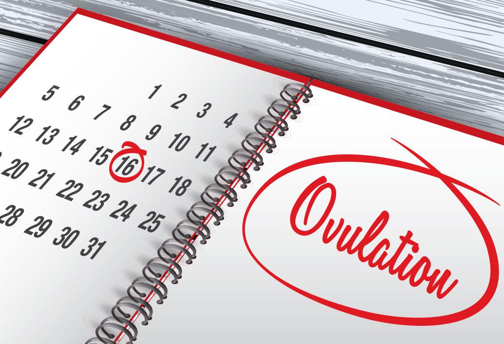 Ovulação - Conheça os Sinais e Sintomas Comuns