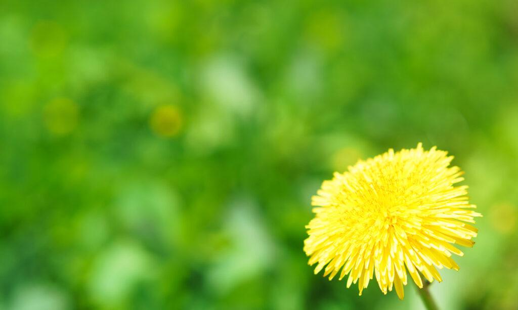 Teoria das Tulipas, Orquídeas e Dentes de Leão: Crianças e Sensibilidade